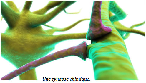 synapse1