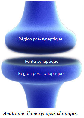 synapse3